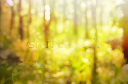 stock-photo-depth-of-tropical-forest-with-magical-sunlight-passing-between-the-trees-303583100