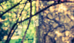 stock-photo-image-of-blurred-green-bokeh-in-garden-and-brick-wall-for-background-usage-vintage-tone-