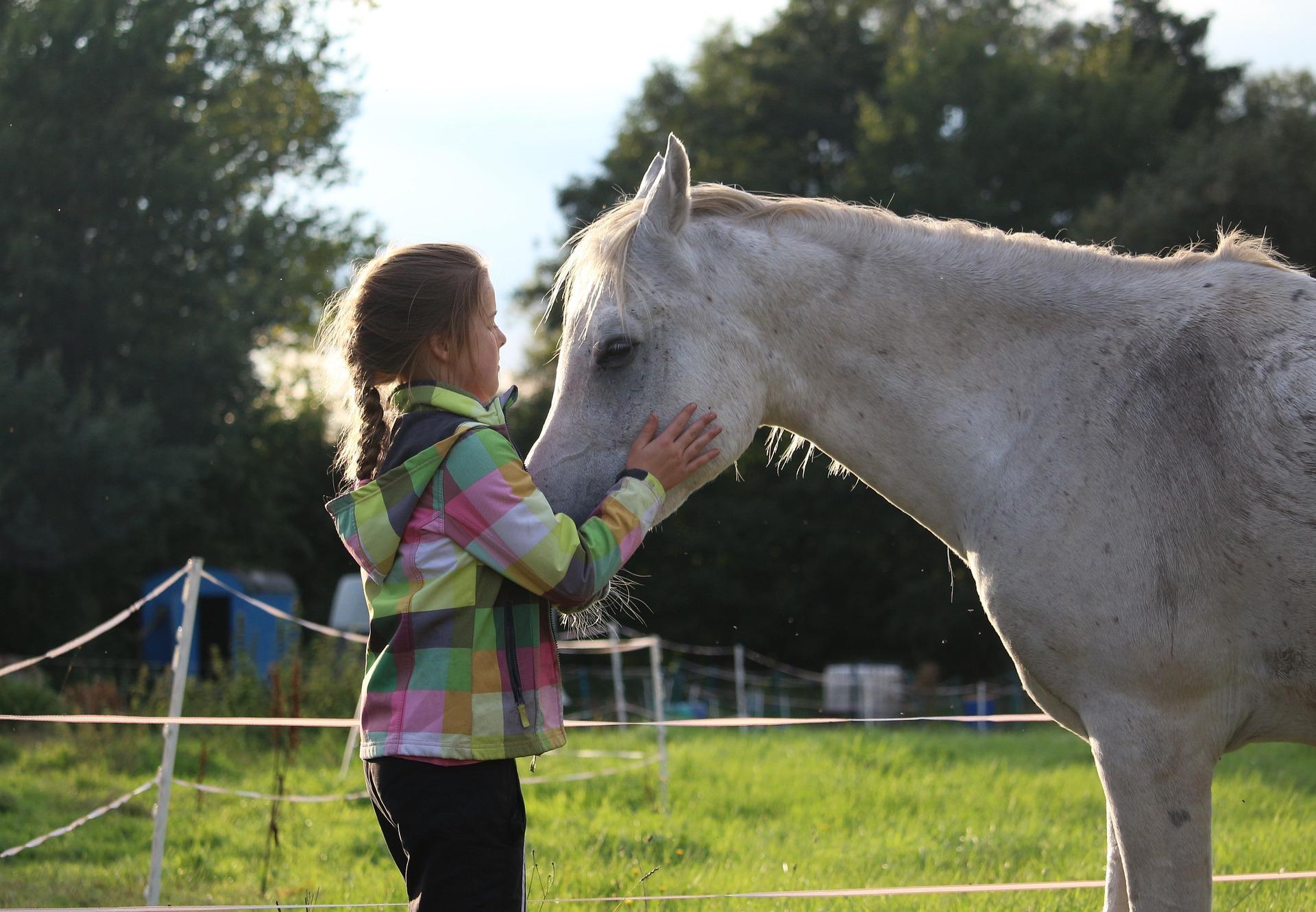 horse-955085_1920
