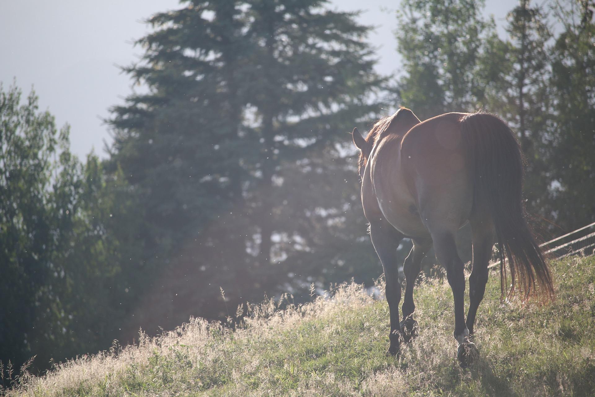horses-1150017_1920