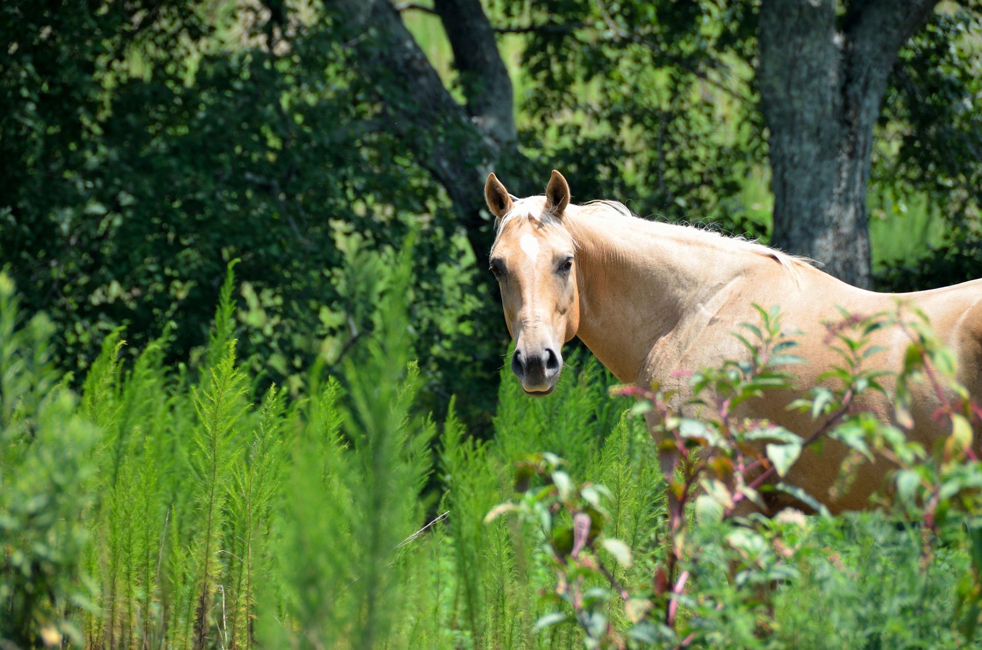 horse-1592723_1920