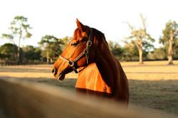 horse-532871_1920