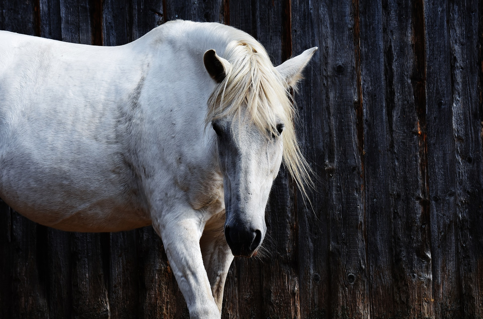 horse-1701665_1920