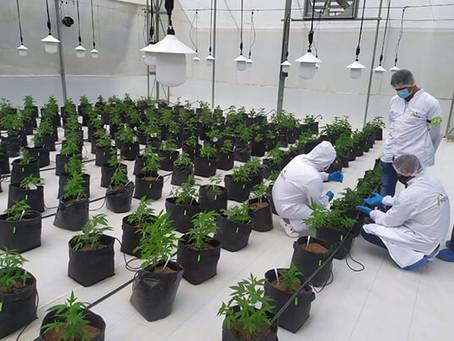 Manejo de Cannabis Medicinal, el nuevo programa que el SENA brinda en Antioquia