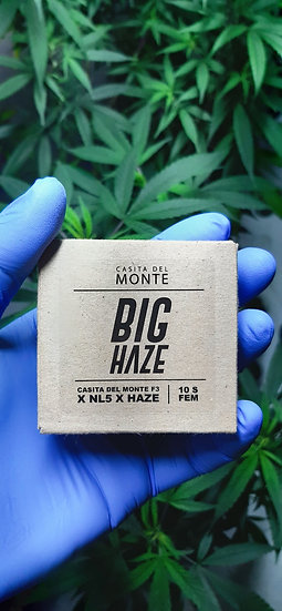 Pack Semillas BIG HAZE Feminizadas