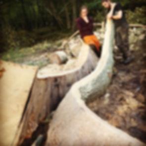 spliting oak tree