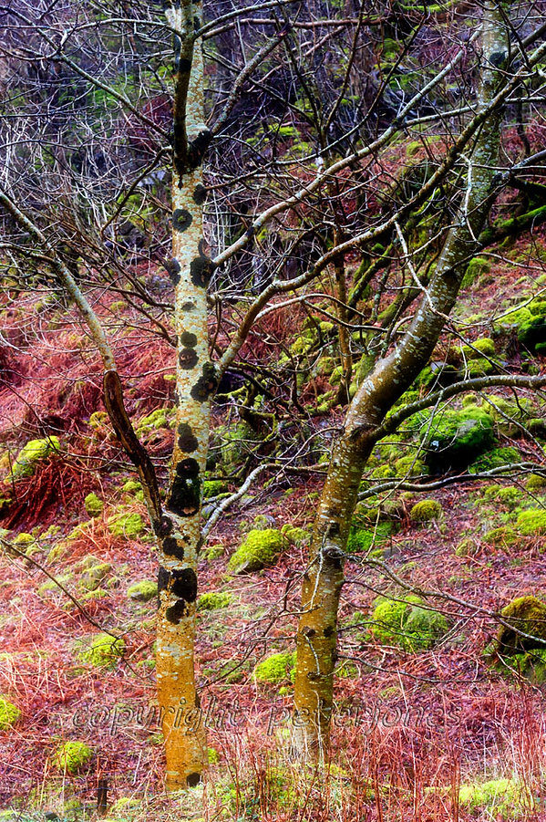wet trees II.jpg