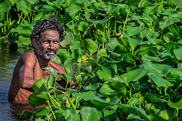 moving the water hyacinth.jpg
