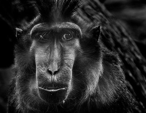 zoo photography_II.jpg