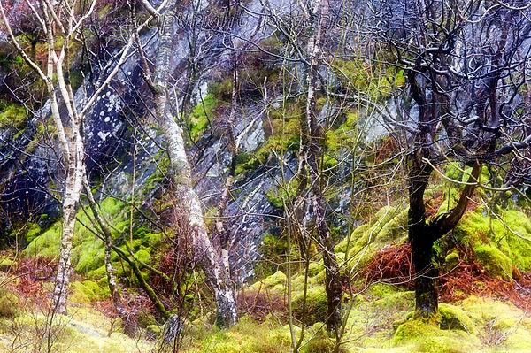 wet trees.jpg