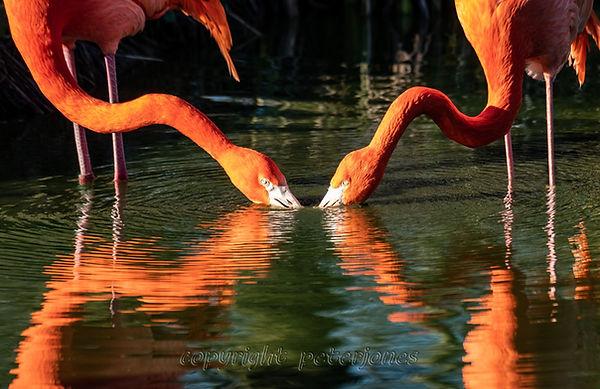 zoo photography flamingos.jpg
