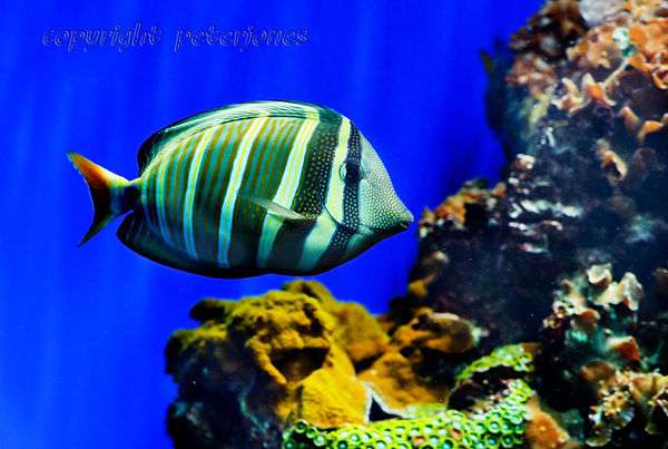zoo photography aquarium fish.jpg