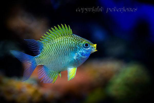 zoo photography aquarium fish_II.jpg