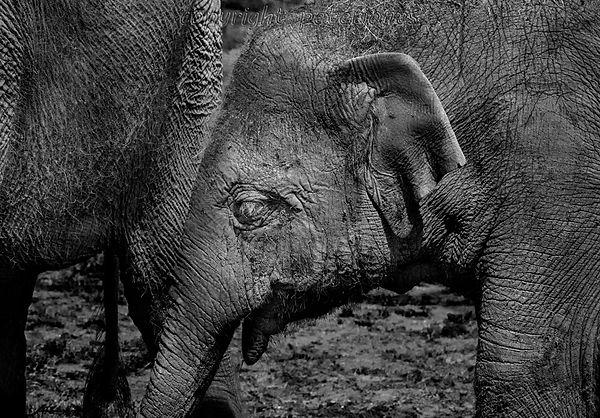 zoo photography young elephant.jpg
