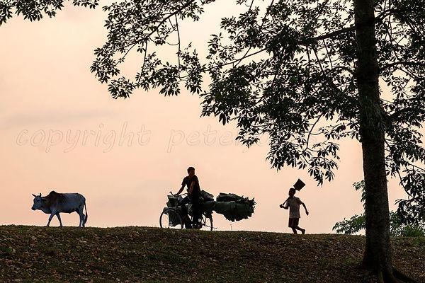 River Brahmaputra Assam India009.jpg