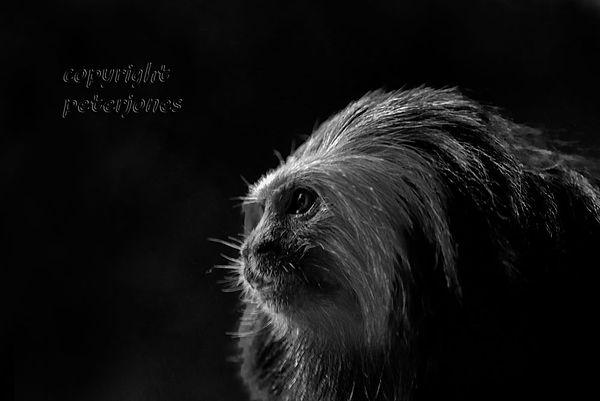 zoo photography_I.jpg