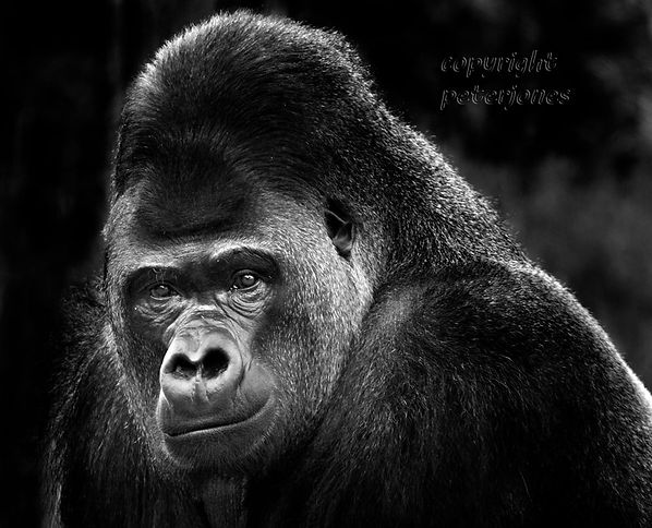 Kumbuka died 25.10.2019.jpg