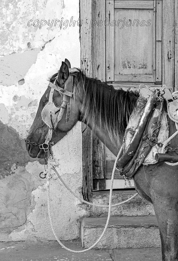 un caballo en Trinidad.jpg