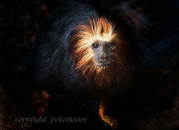 zoo photography brown bear (10).jpg
