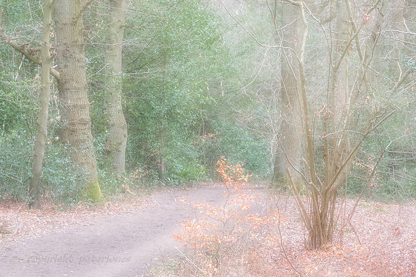 late winter impressionist woodland lands