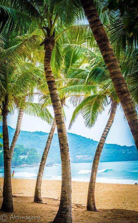 Phuket Palms