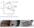 Performance deterioration in centrifugal Compressors: Fouling phenomenon
