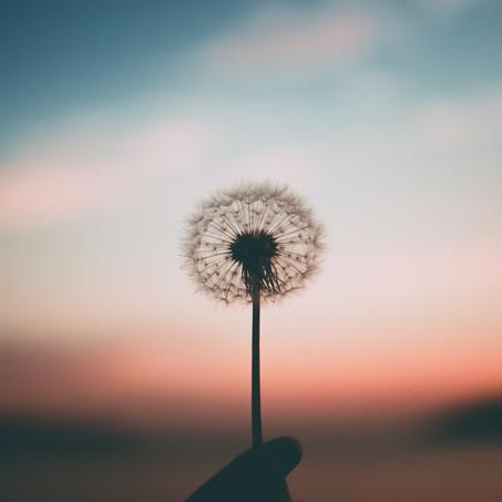 Frucht des Geistes: Friede
