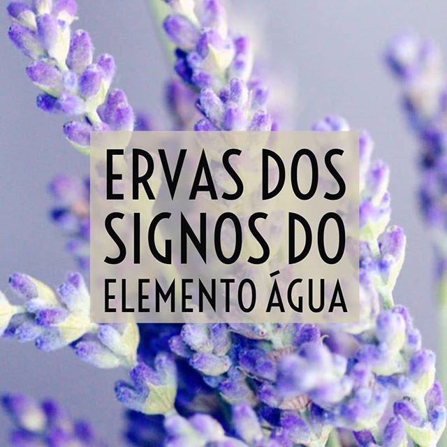 Signos do elemento água CÂNCER / ESCORPIÃO / PEIXES