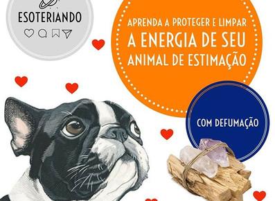 Como fazer limpeza energética nos animais de estimação