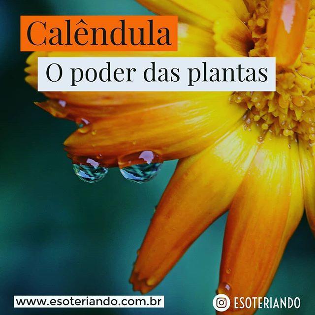 """Curiosamente, essa flor abre suas pétalas assim que o sol nasce e as fecha na hora em que ele se vai. Aliás, seu nome é derivado de uma palavra latina Calendae - que significa """"primeiro dia de cada mês""""."""