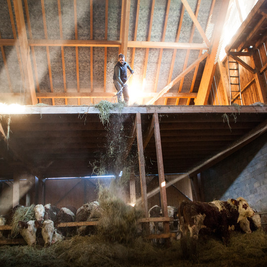 la grange et le foin