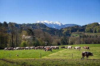Ferme de Maneguet Haute -Savoie