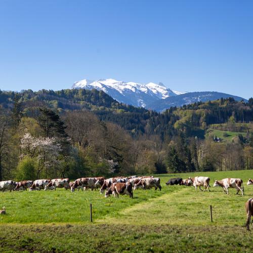 paysage de la ferme de Maneguet