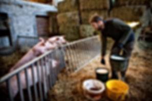 Vente de viandes producteur