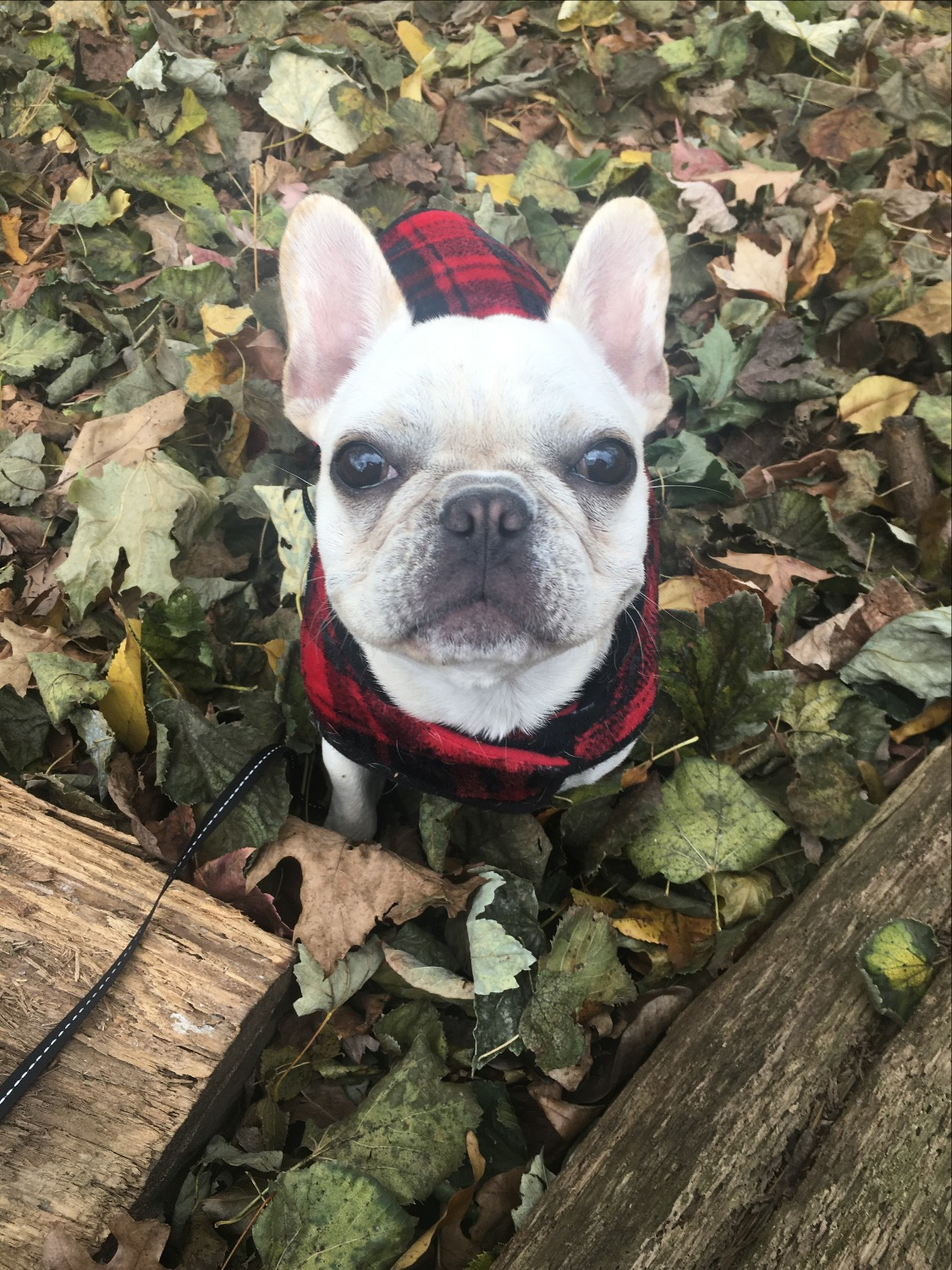 Gunther having fun playing in the leaves!