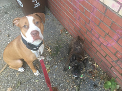 Maggie and fish on their walk!