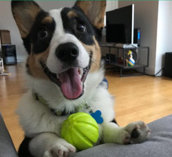 Cooper is very eager to play!
