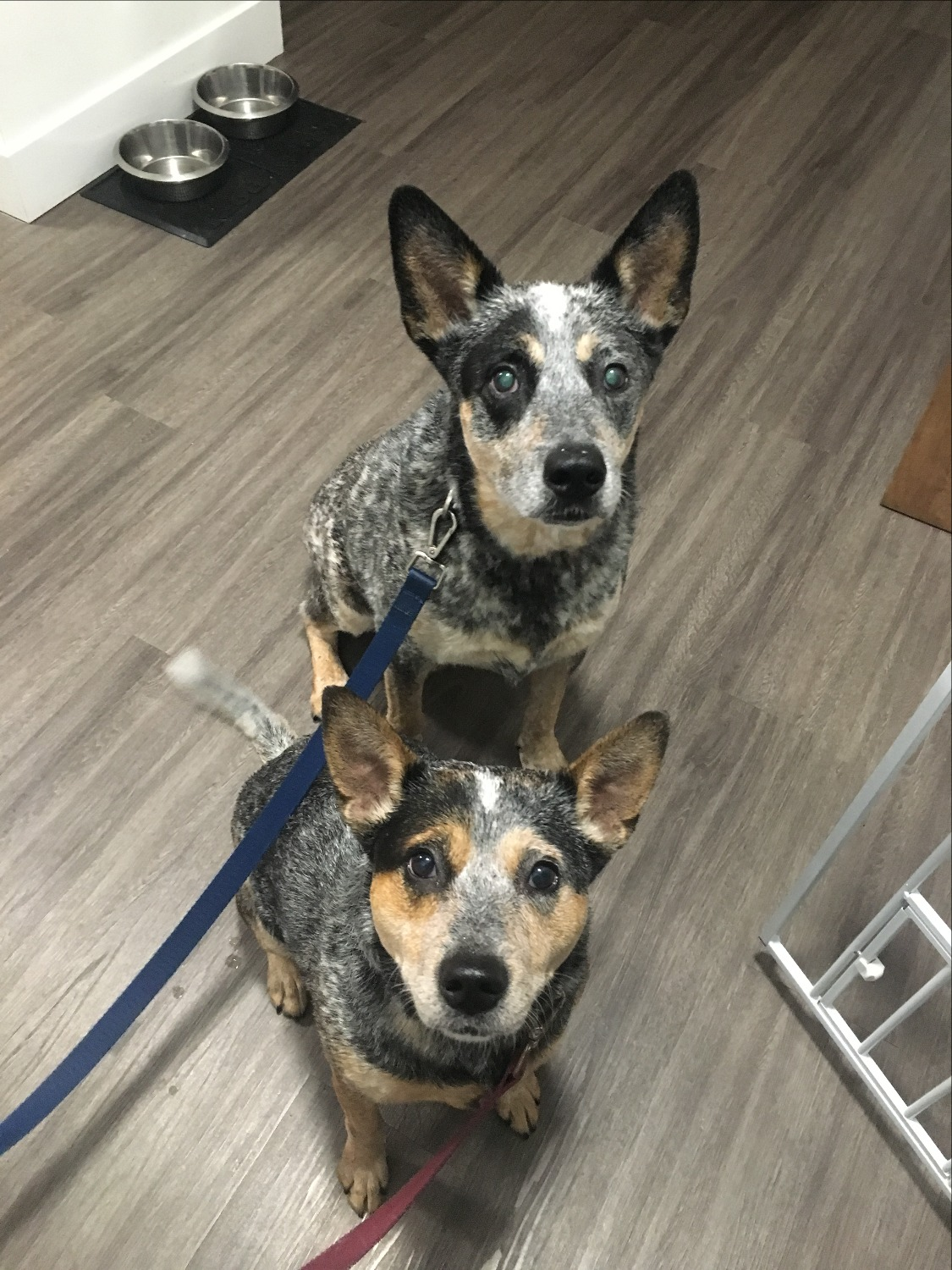 Mia and Max are ready for their walk!