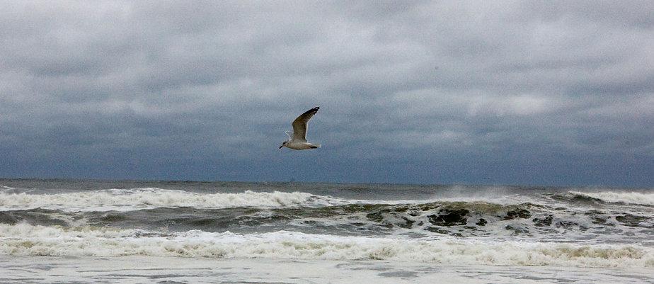 Fire-Island-seagull-2.jpg
