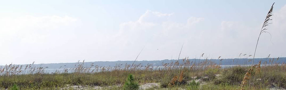 beach-grass.jpg