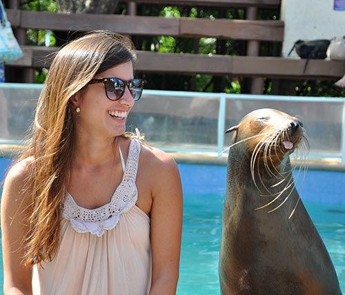 sea-lions-cozumel.jpg