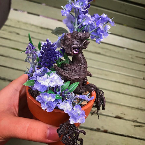 'Talulah' - the potted lavender dragon