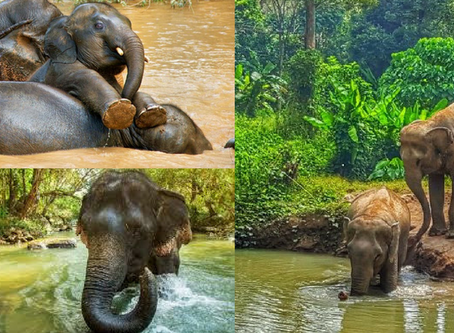 The truth about Thailand's 'elephant sanctuaries'