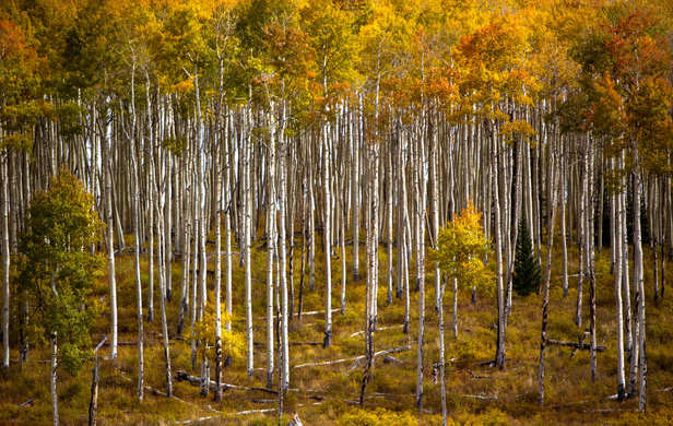 Mountainside Fall Leaves