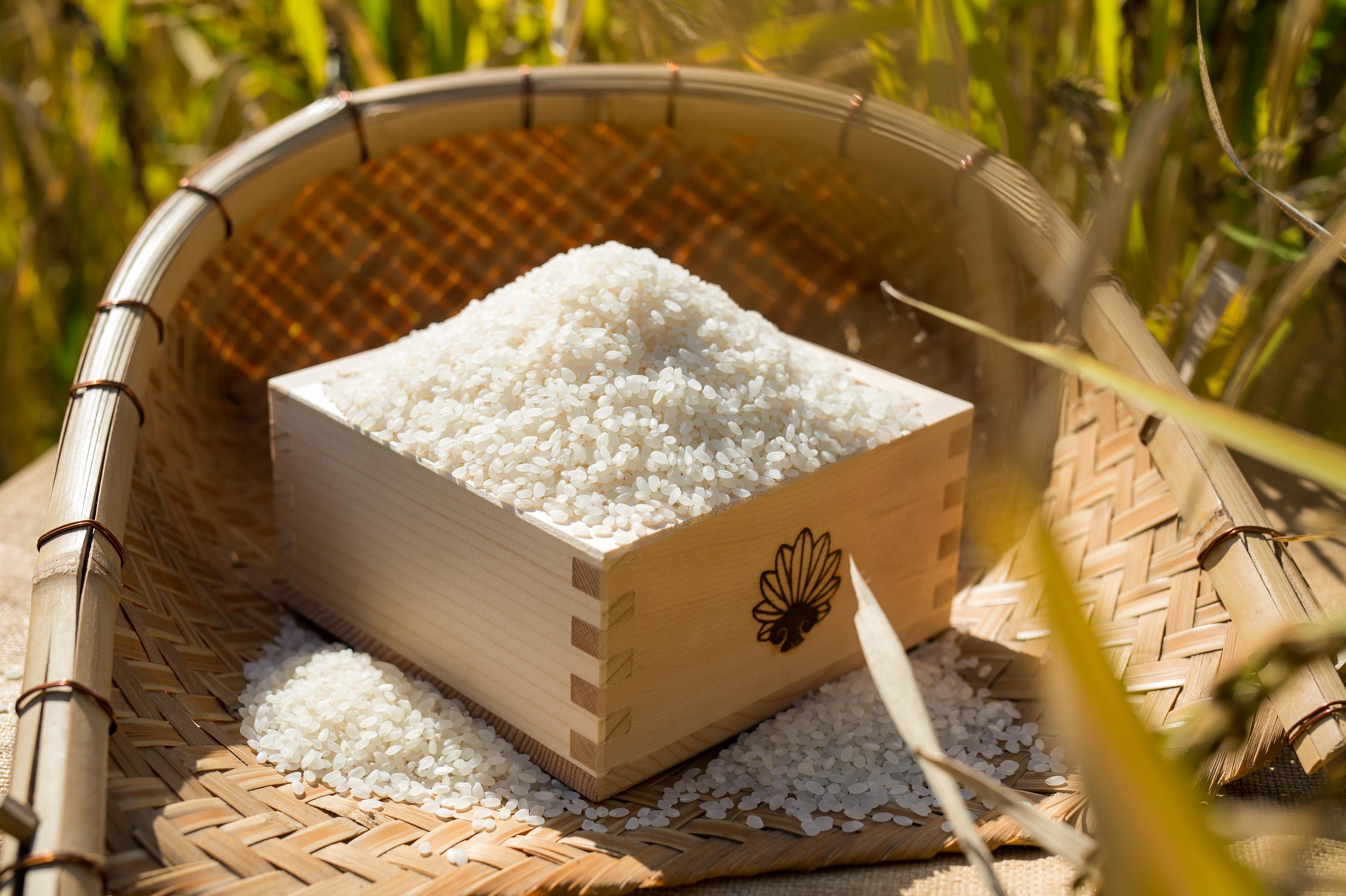 美味しいお米