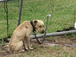 Cane catena.jpg