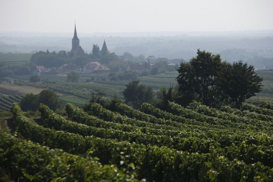 Pulkau vom Weingarten