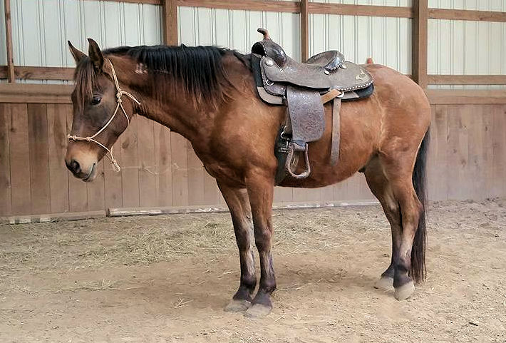 First time with saddle!