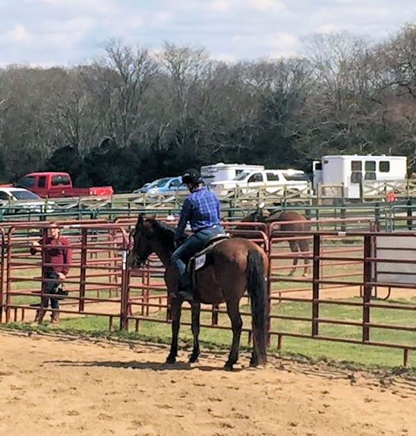 March 19, 2016 Horse Show