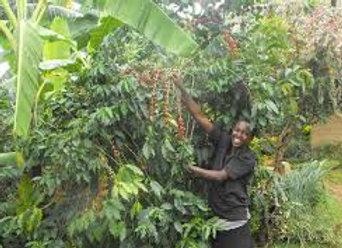 Uganda Mount Elgon
